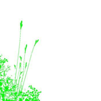 A bidg green foliage on a white background