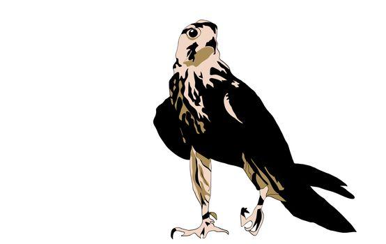Black bird predator aggressive hawk looking prey