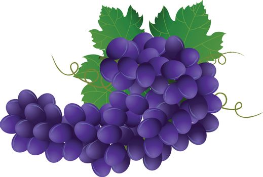 Vector image of violet grape with green leaves