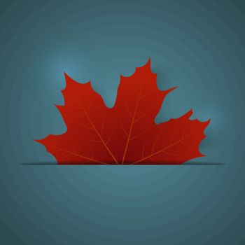 Red maple leaf on a blue background
