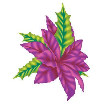 Violet Poinsettia - Colored Illustration, Vector