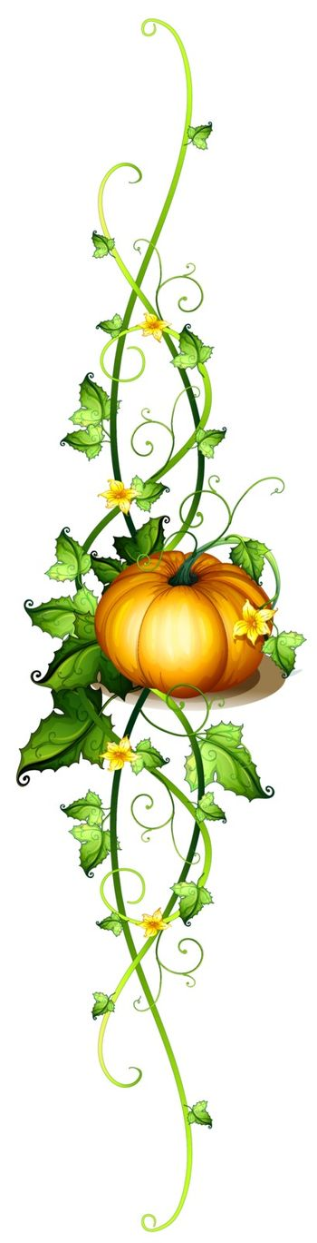 Illustration of a pumpkin decor on a white background