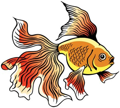 goldfish or golden fish, side view image isolated on white
