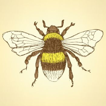 Sketch bumble bee in vintage style, vector background