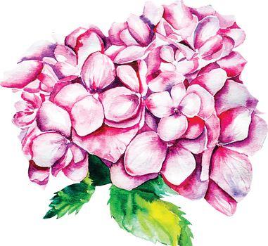 Watercolor Vector hydrangea Flowers.  Vector illustration EPS