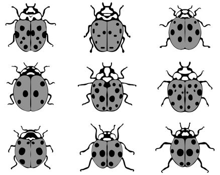 Set of different gray ladybugs, vector