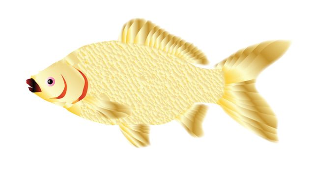 A trpical pet goldfish over a white background