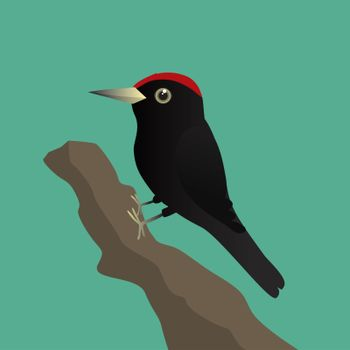 A vector illustration of a black woodpecker on a tree trunk with a green background