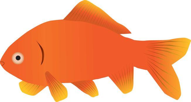 A single goldfish on a white background