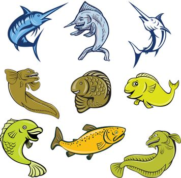 Set or collection of cartoon character mascot style illustration of marine life and fish like the blue marlin, swordfish, eel, koi carp, trout and salmon on isolated white background.