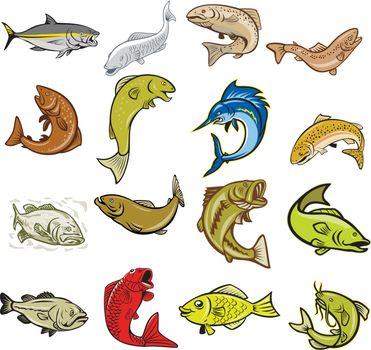 Set or collection of cartoon character mascot style illustration of marine life like tuna, trout, salmon, sea bass, largemouth, catfish, koi carp, herring, gourami fish on isolated white background.