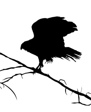 Eagle silhouette on a tree, vector objects over white background