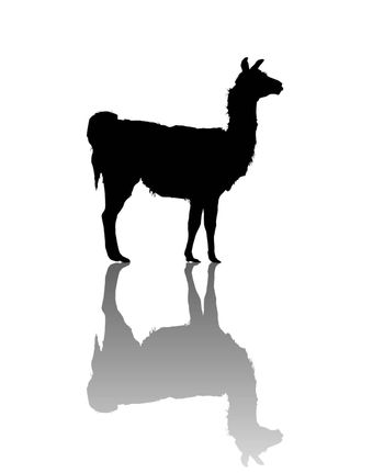 Vector llama silhouette over white background