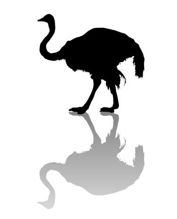 Vector silhouette of an ostrich over white background