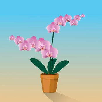 A pink Orchidaceae plant in a terracotta pot