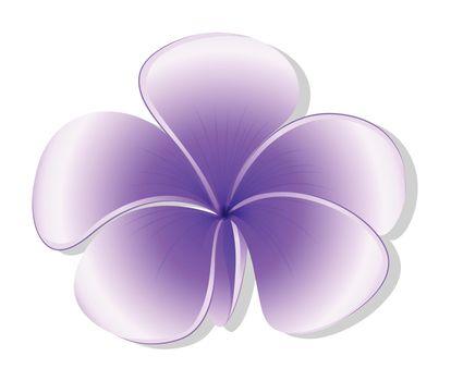 Illustration of a violet flower on a white background