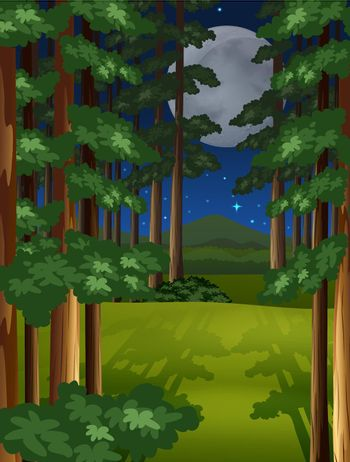 Night scene of the forest on fullmoon night