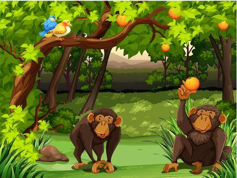Two monkies sitting under orange tree