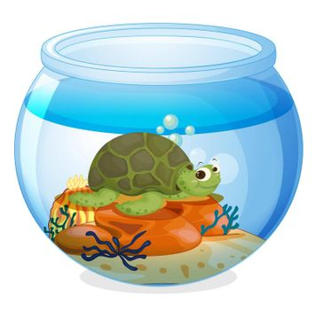 illustration of a water bowl and a tortoise on a white background