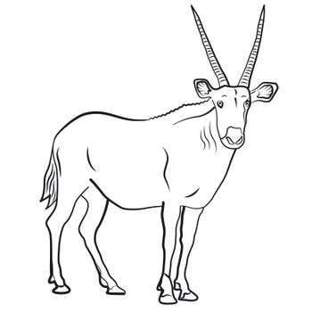 Outline Illustration of the african antelope on the white background