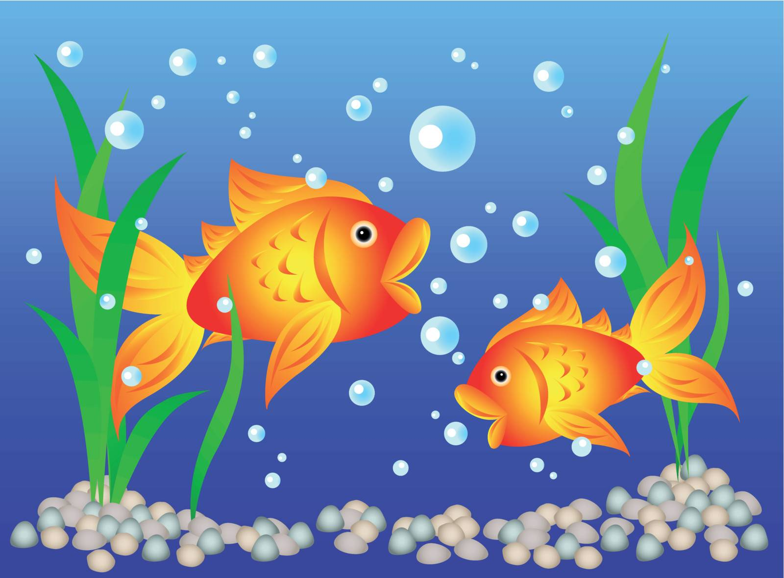 Fun and colorful: goldfish in an aquarium with algae and pebbles.