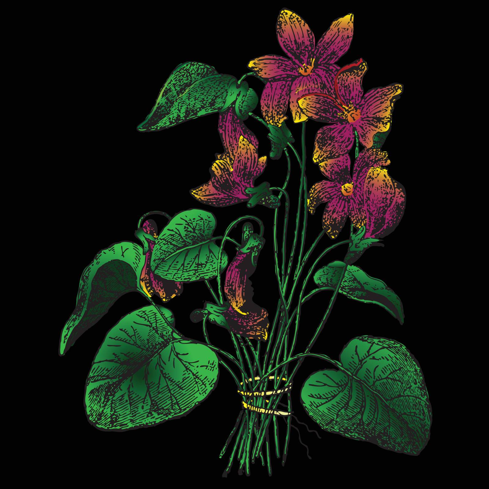 Figure violets on a black background. Vector illustration.