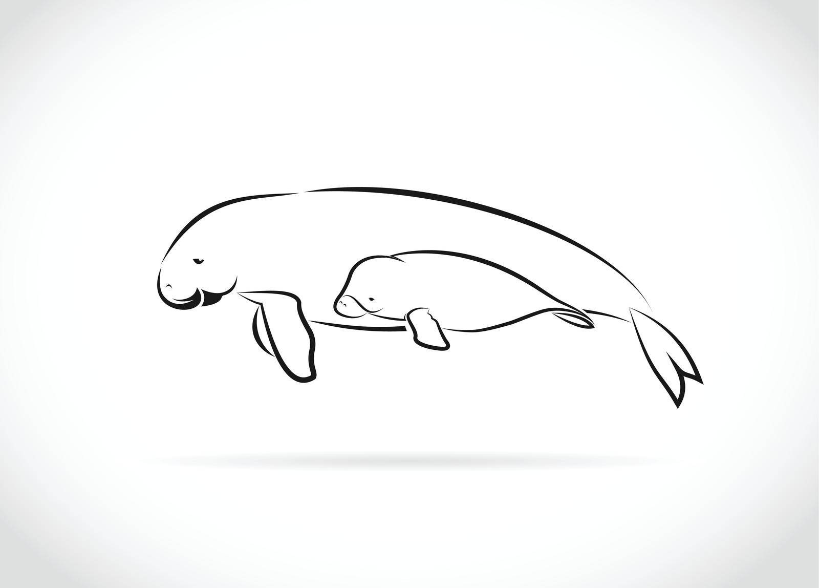 Vector of mother dugong and baby dugong design on white background. Easy editable layered vector illustration. Wild Animals.