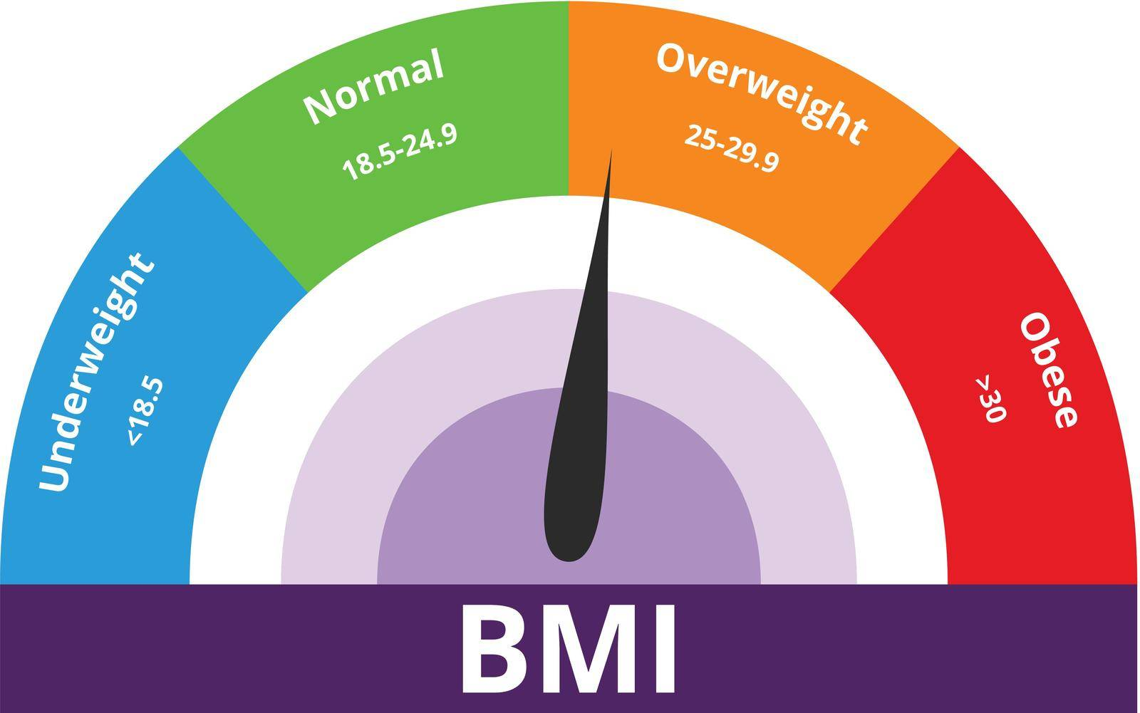 Body Mass Index overweight concept. Colorful BMI Chart vector illustration with white isolated background.