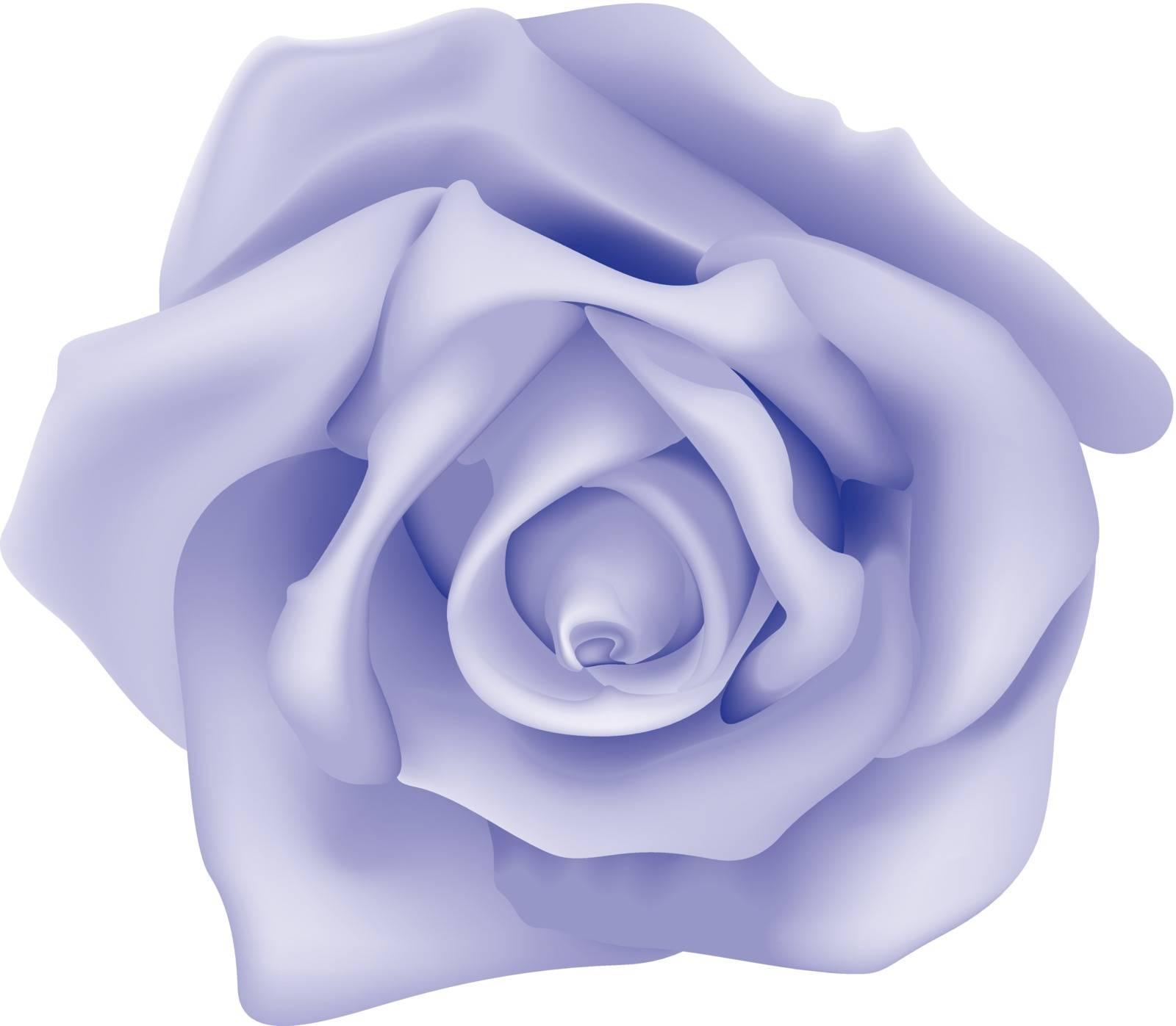 Violet Rose - Colored Illustration, Vector