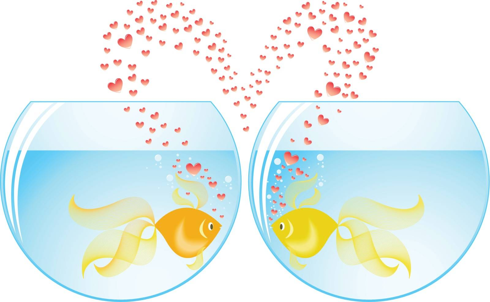 two gold fish lovers in different aquariums