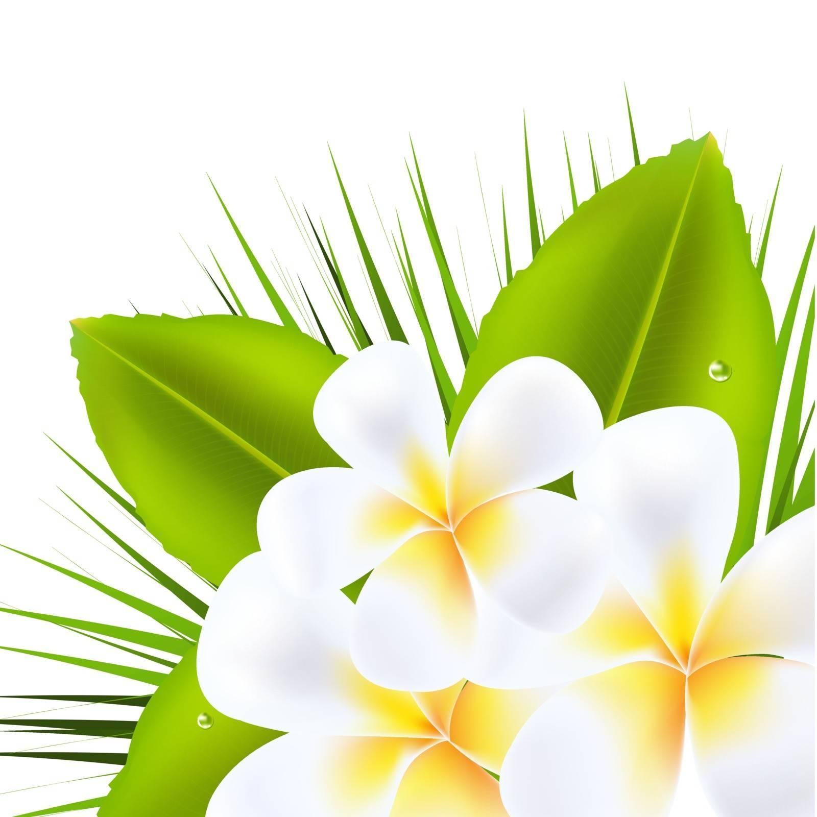 3 Beautiful Frangipani, Isolated On White Background, Vector Illustration