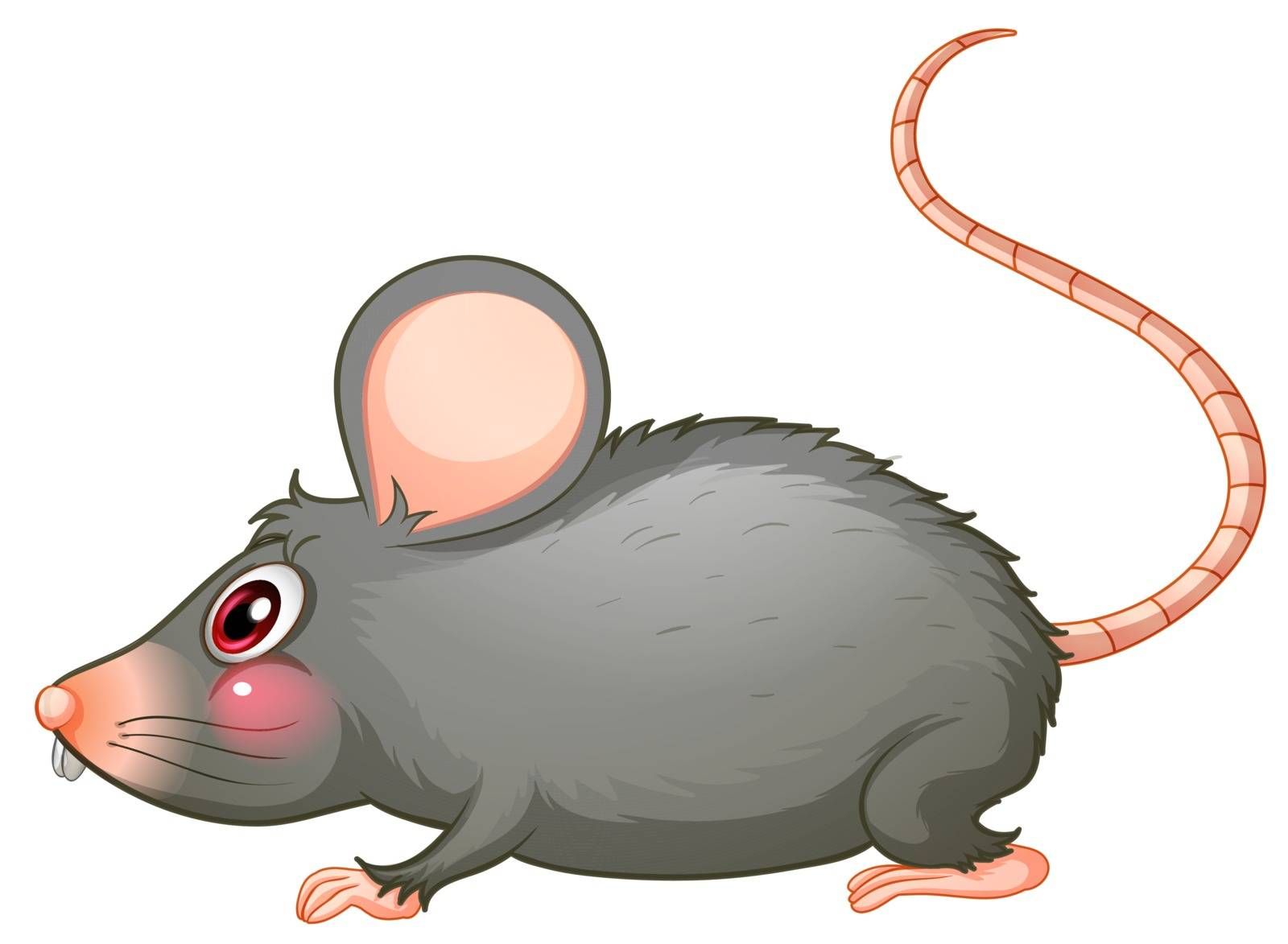 Illustration of a gray rat on a white background