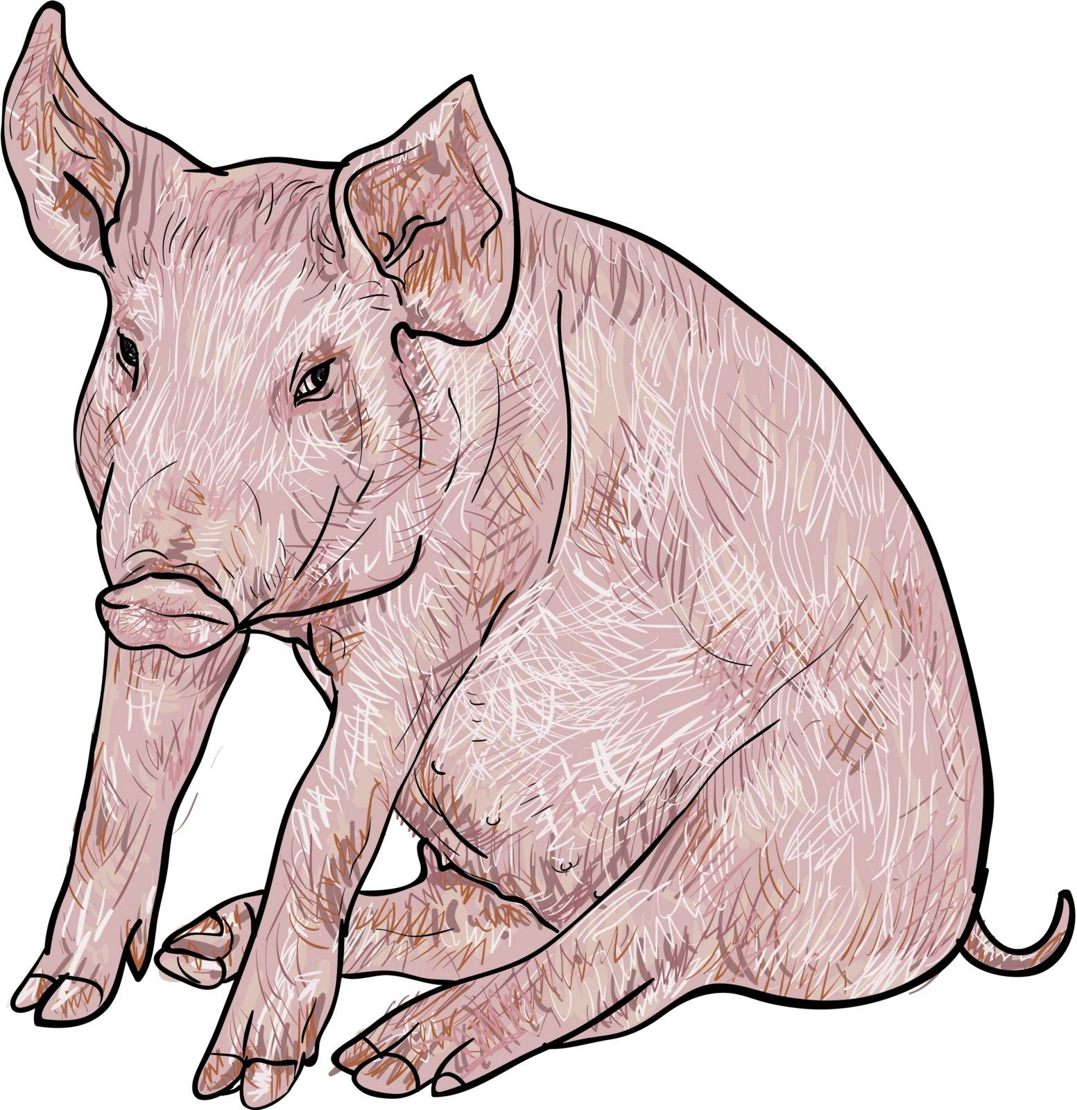 Drawing of pig on white background,vector illustration