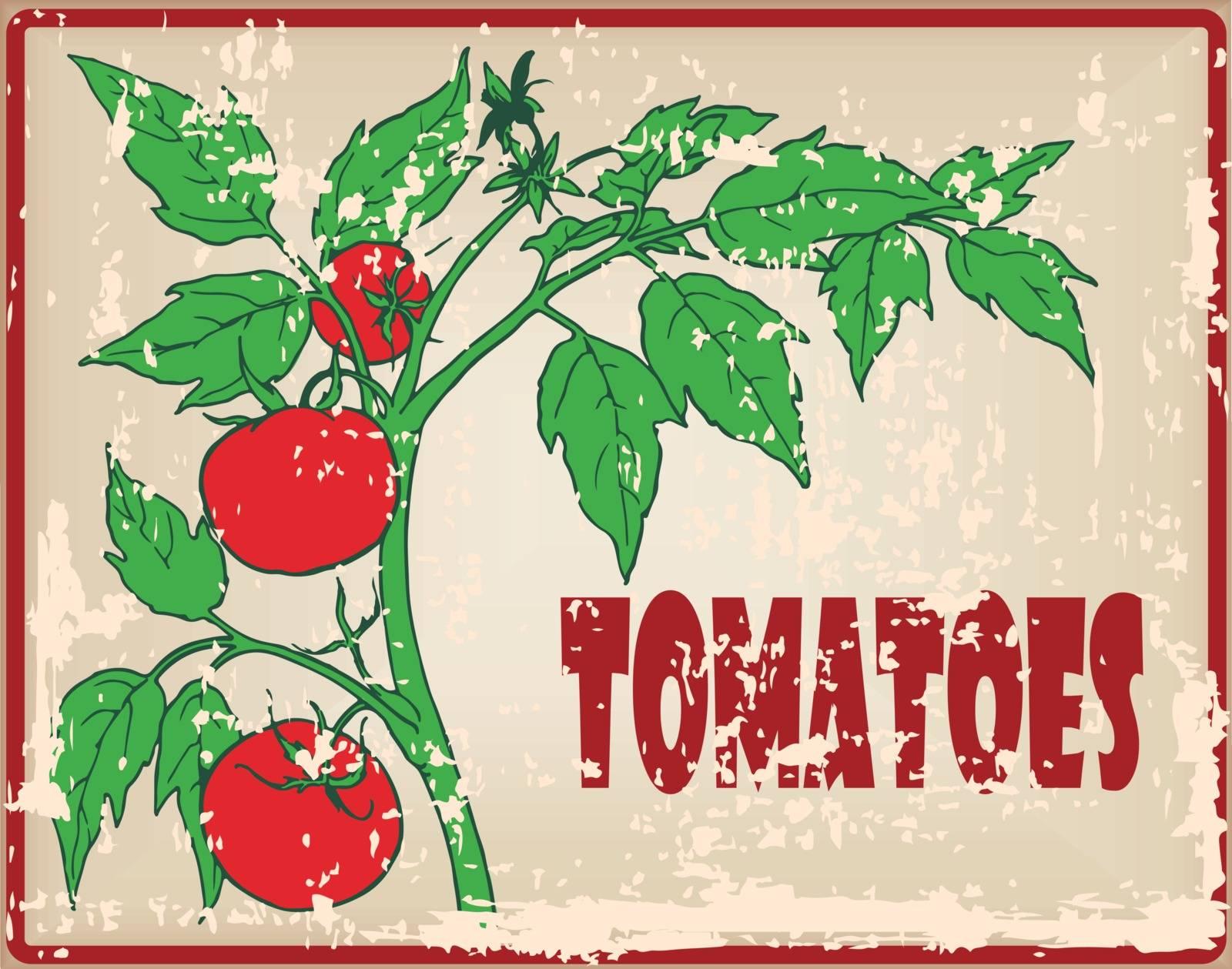 Organic tomatoes on the bush, vintage card. Vector illustration.