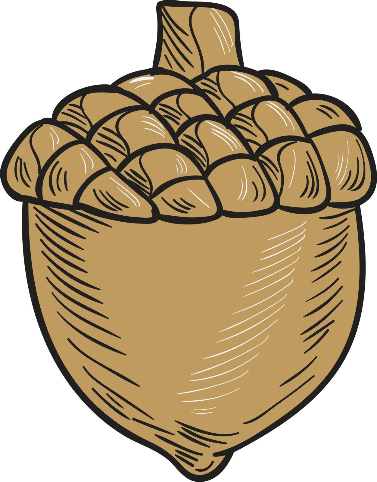 Drawing sketch style illustration of an acorn set on isolated white background.