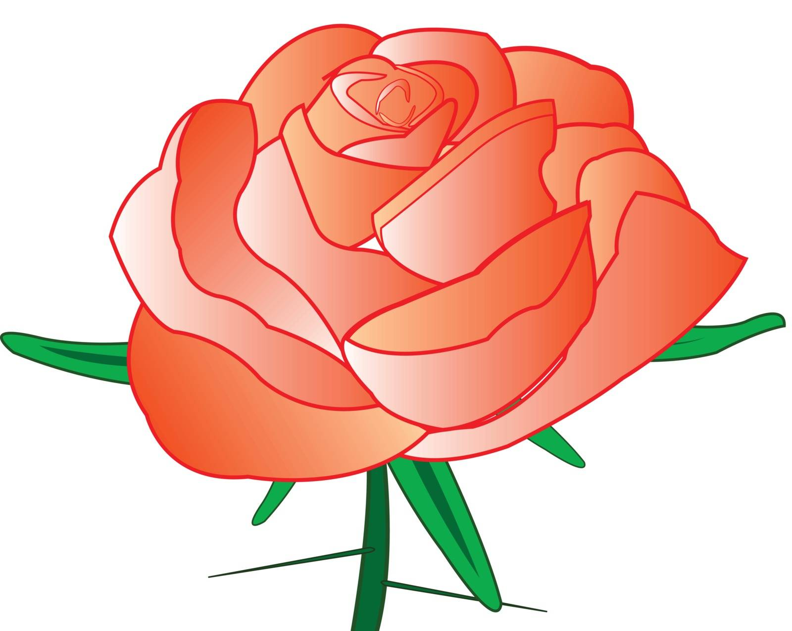 Red rose with thorn on white background is insulated