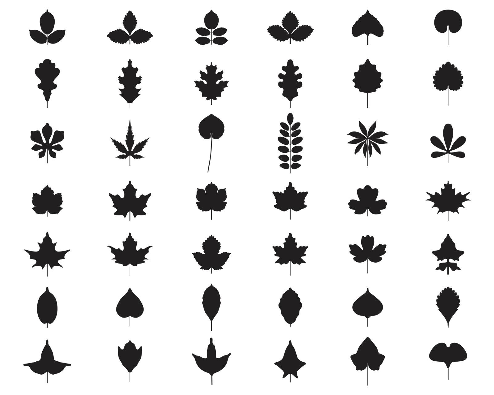 Black silhouettes of foliage on a white background