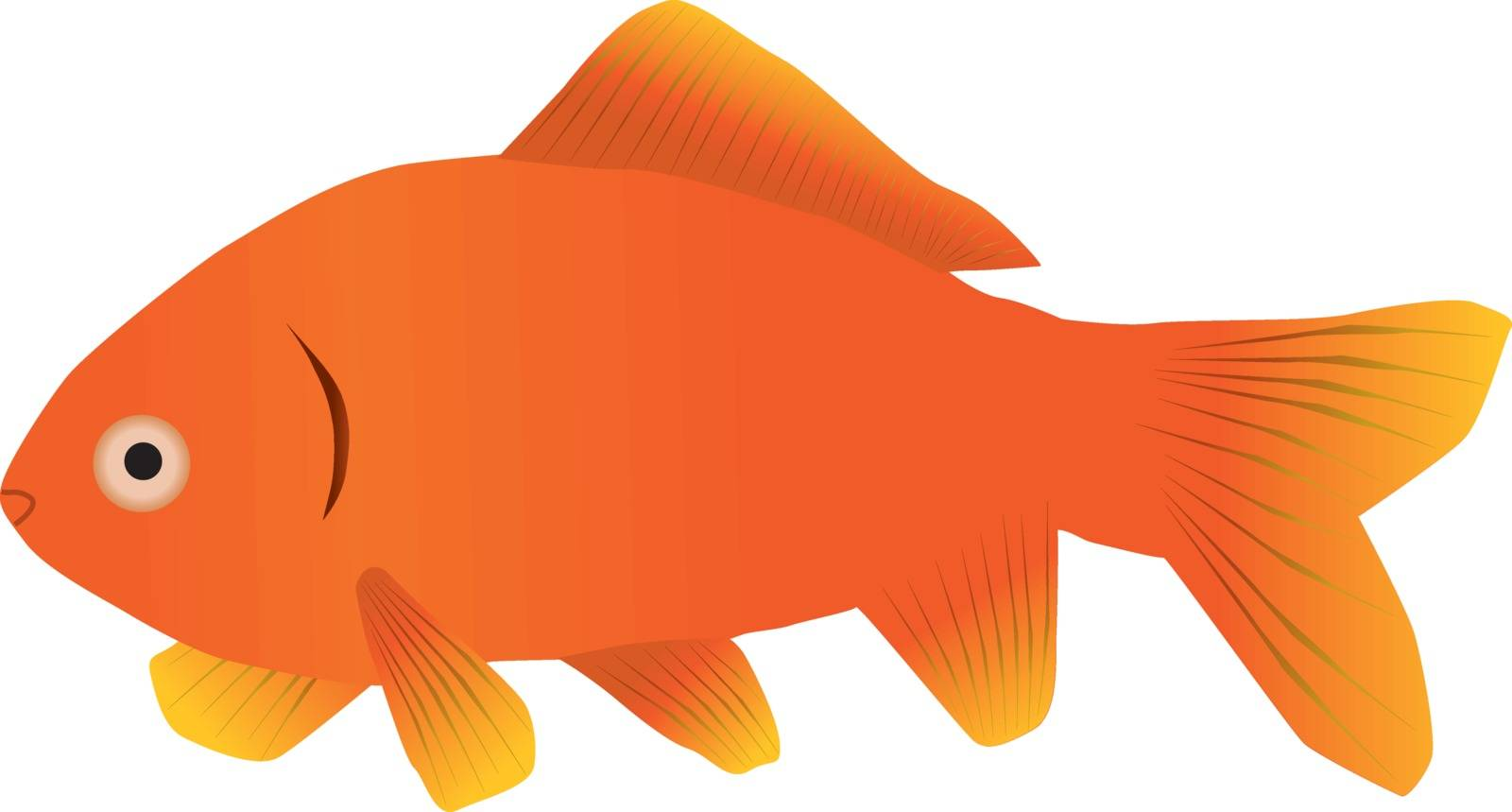 A goldfish by Bwise