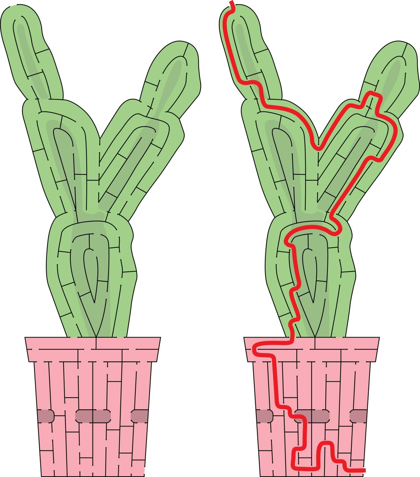 Cactus maze for kids with a solution