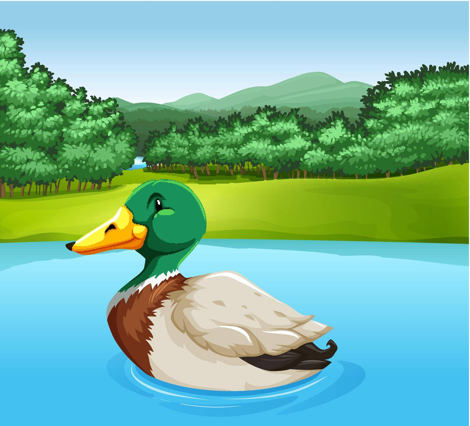 Colorful duck swimming in the lake