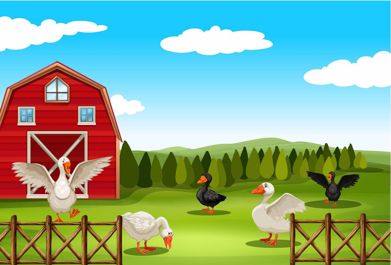 Geese living in the farmland