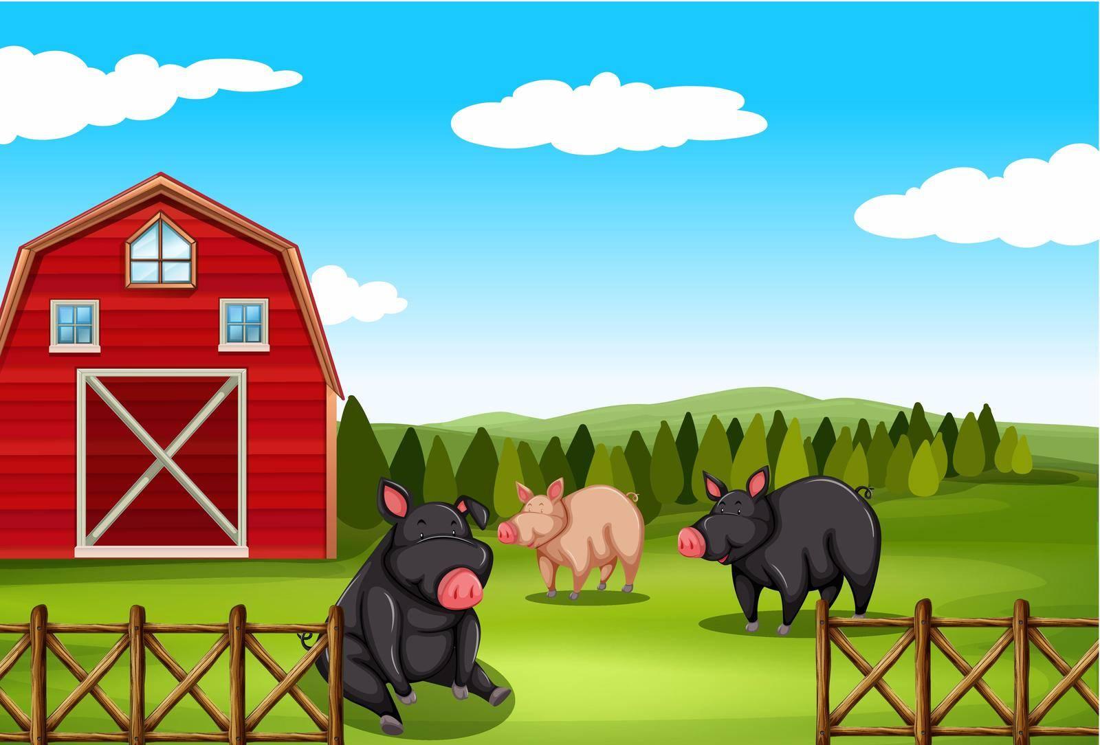 Pigs sitting in a farm field